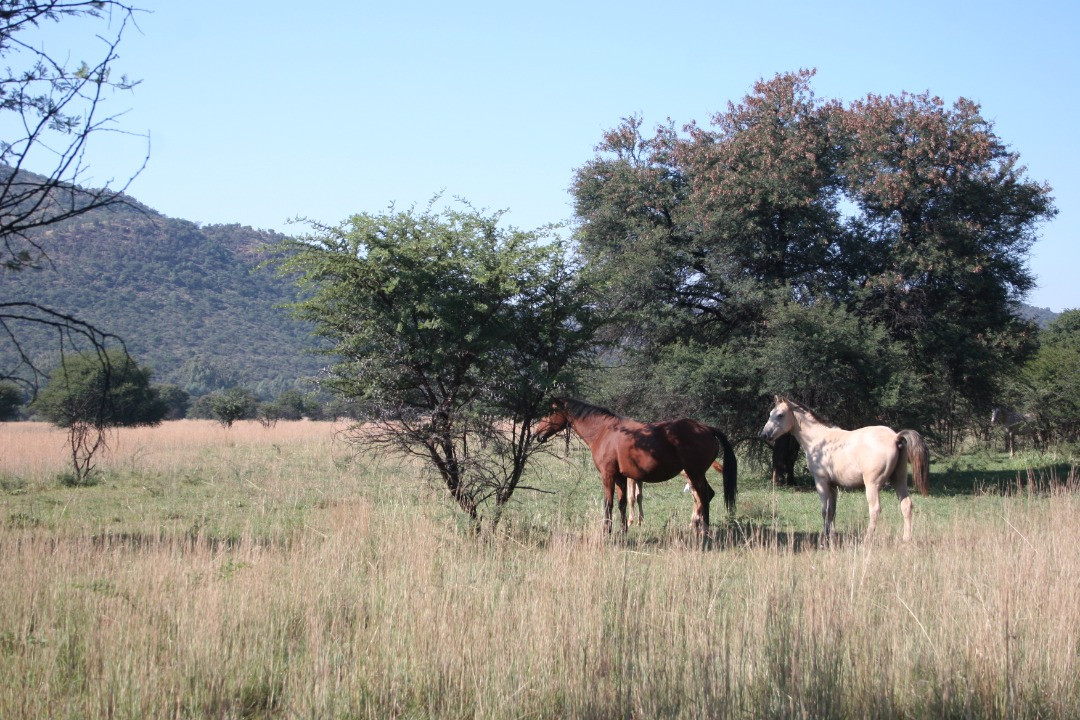Opportunity for Pecan nut farm/ Lifestyle estate in Rooderand Farm for sale!
