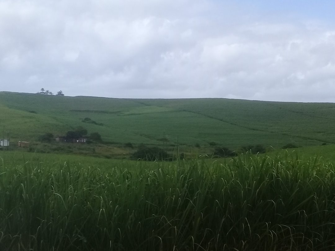 11.1 ha of land for sale