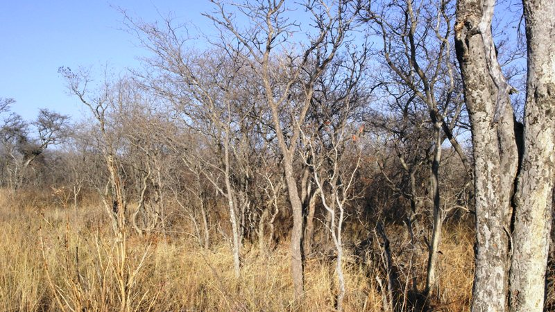 Farm for sale in Vaalwater ENT0008965 : photo#17