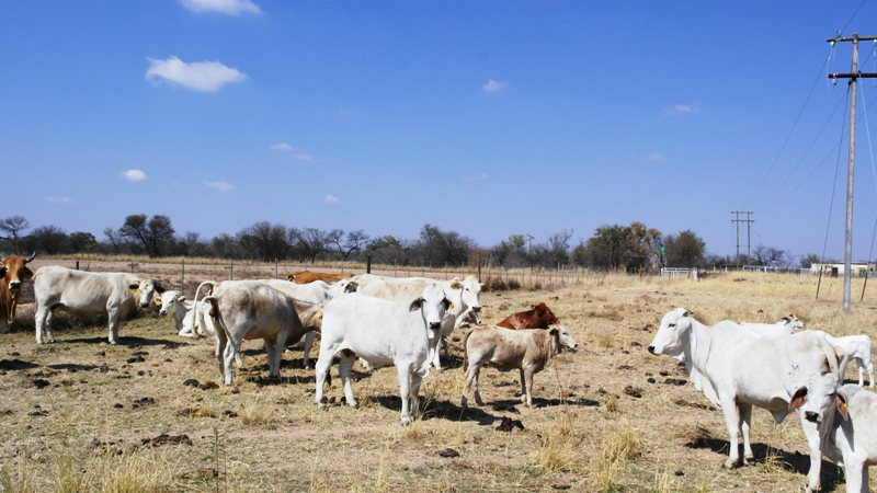 Farm for sale in Vaalwater ENT0049441 : photo#20