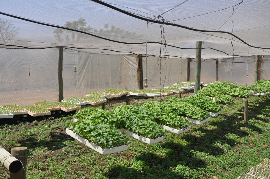 Wow! What a value in this Vegetable Farm with Training Opportunity