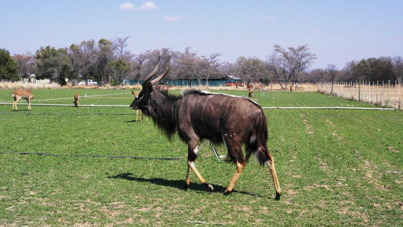 Farm for sale in Vaalwater ENT0049441 : photo#19