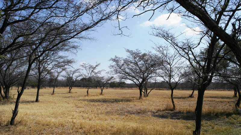 Farm for sale in Vaalwater ENT0049441 : photo#4