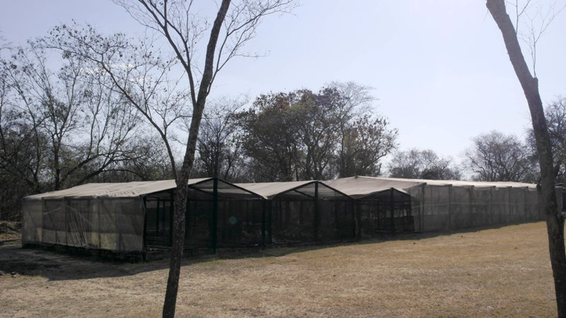 Farm for sale in Vaalwater ENT0008965 : photo#14