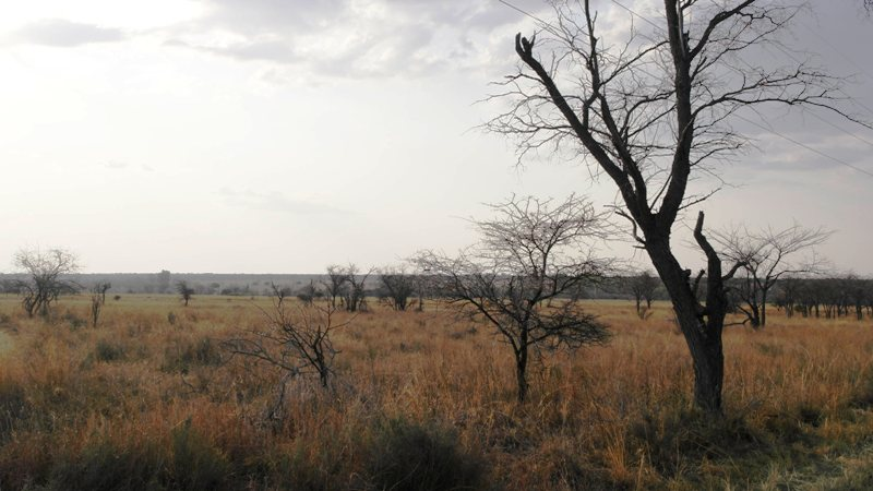 Farm for sale in Vaalwater ENT0001857 : photo#20
