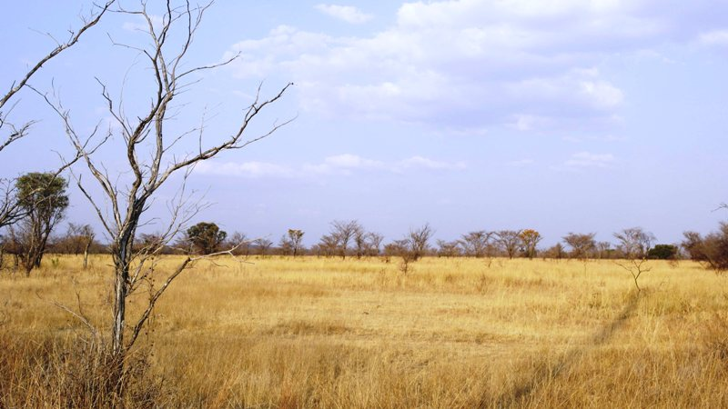 Farm for sale in Vaalwater ENT0001857 : photo#21