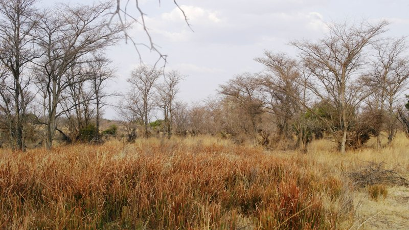 Farm for sale in Vaalwater ENT0001857 : photo#24