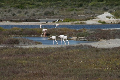 Vacant Land Residential for sale in Yzerfontein ENT0037419 : photo#3