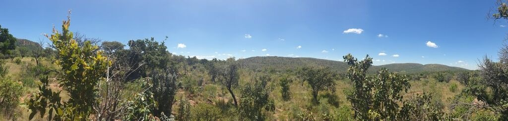 STUNNING WATERBERG BUSH STAND FOR SALE