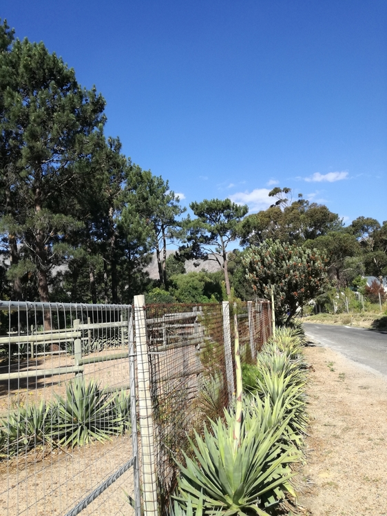 Large plot in country estate