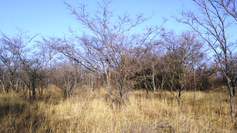 Farm for sale in Vaalwater ENT0008965 : photo#19