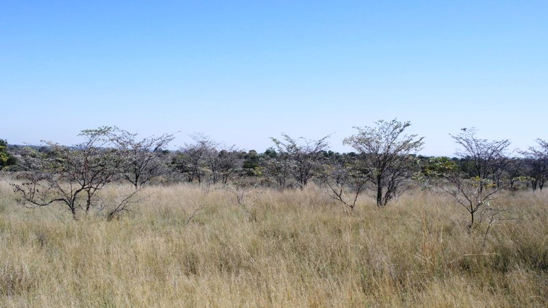 Farm for sale in Vaalwater ENT0032975 : photo#3