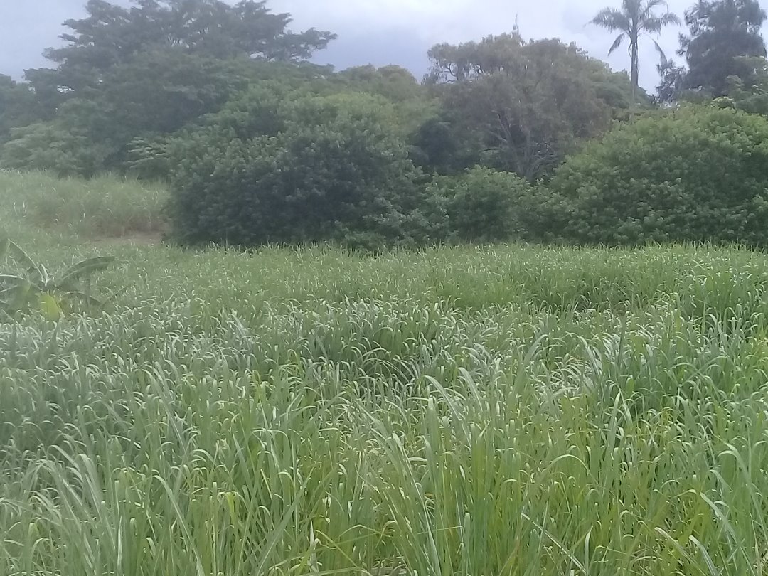 8.5 ha agricultural land for sale Frasers Tongaat