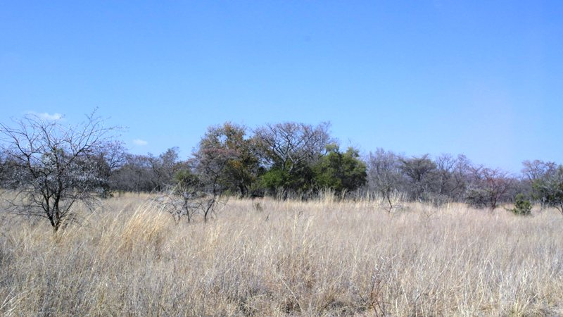 Farm for sale in Vaalwater ENT0049441 : photo#13
