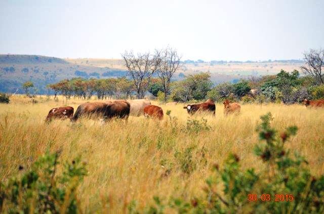 Farm For Sale In Zeerust