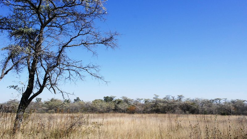 Farm for sale in Vaalwater ENT0032975 : photo#15