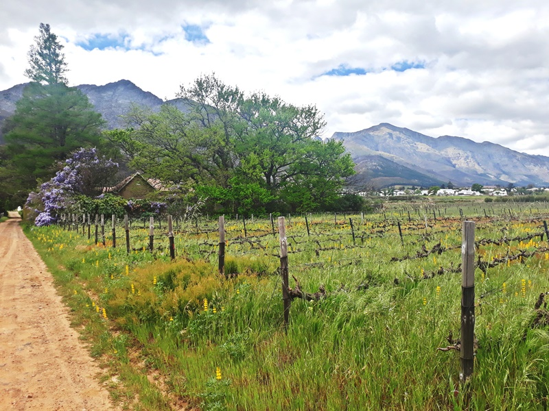 3 BedroomFarm For Sale In Franschhoek
