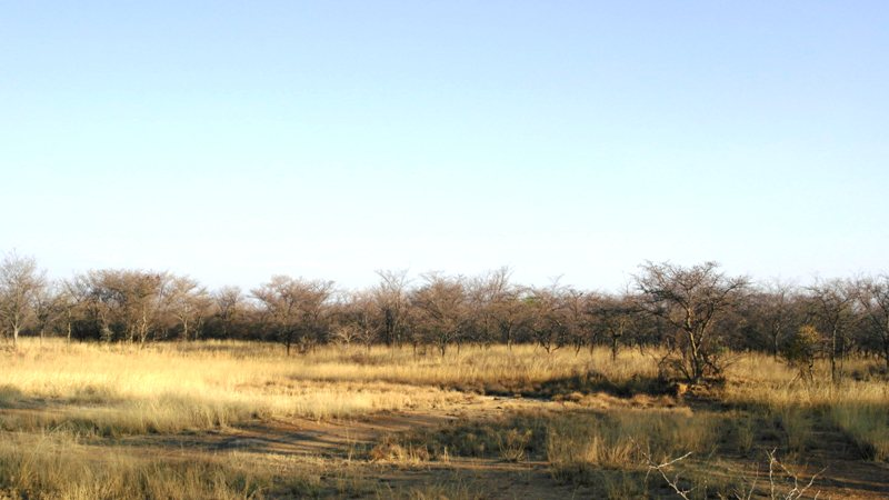 Farm for sale in Vaalwater ENT0008965 : photo#20