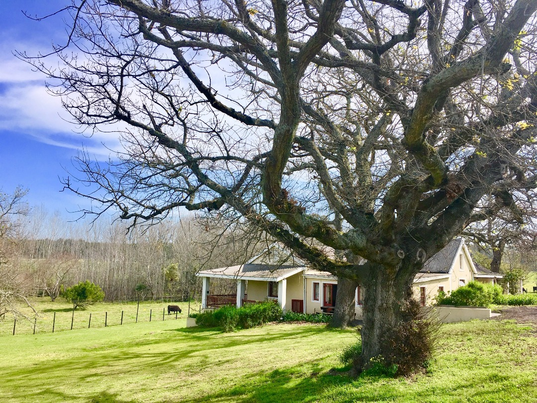 Beautiful Farm with conference facilities and 5 houses | STELLENBOSCH