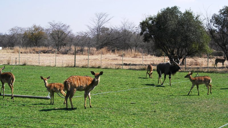 Farm for sale in Vaalwater ENT0049441 : photo#18