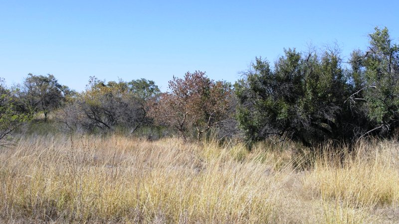 Farm for sale in Vaalwater ENT0032975 : photo#11