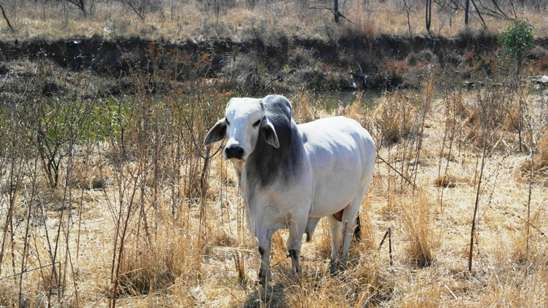 Farm for sale in Vaalwater ENT0049441 : photo#21