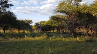 Own a share in an exclusive GAME FARM - HERMANUSDOORNS