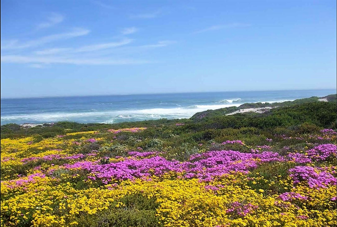 Vacant Land Residential for sale in Yzerfontein ENT0037419 : photo#19