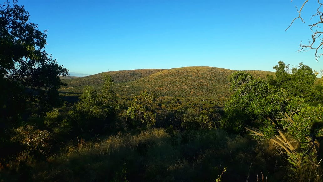 BUSH STAND FOR SALE IN THE MAJESTIC WATERBERG