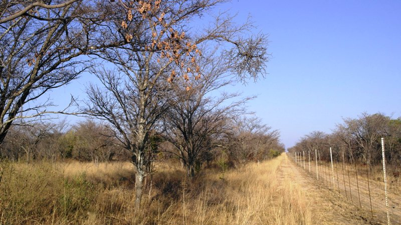 Farm for sale in Vaalwater ENT0008965 : photo#18