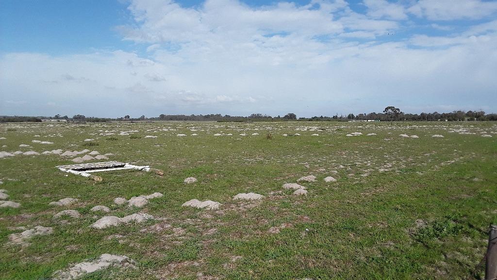 34 ha open land