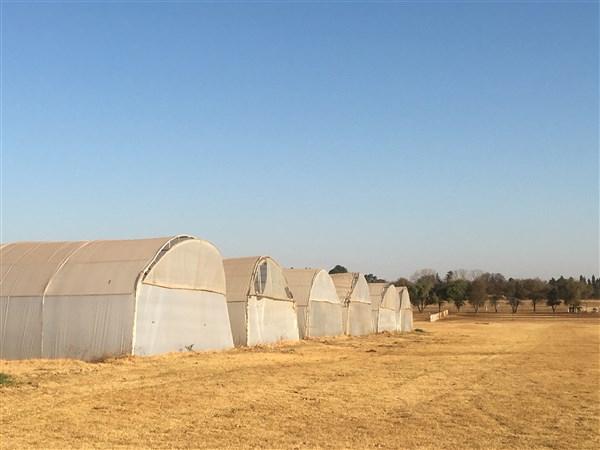Farm For Sale In Magaliesburg