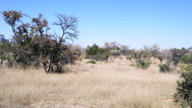 Farm for sale in Vaalwater ENT0032975 : photo#12