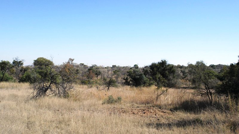 Farm for sale in Vaalwater ENT0032975 : photo#10