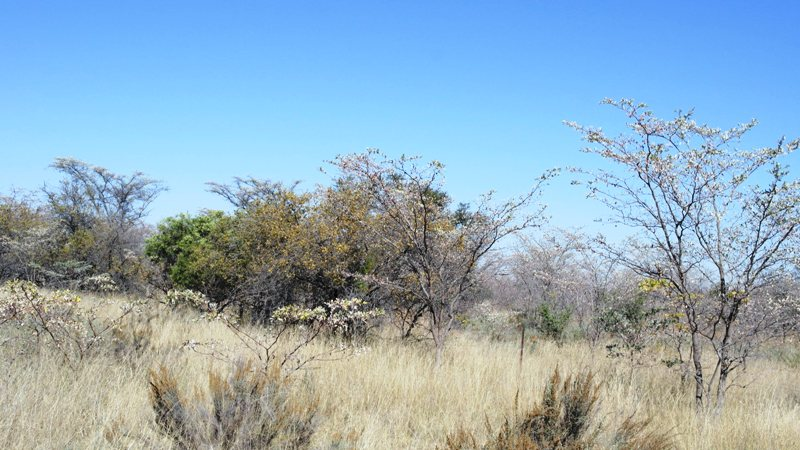 Farm for sale in Vaalwater ENT0032975 : photo#2